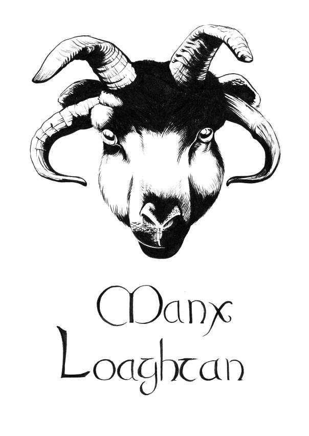 Manx Loaghtan